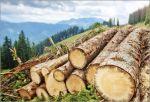 Welches Holz für den Unterstellplatz?